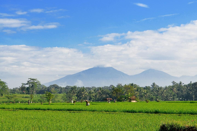 Rizières à Ubud, Bali - Indonésie
