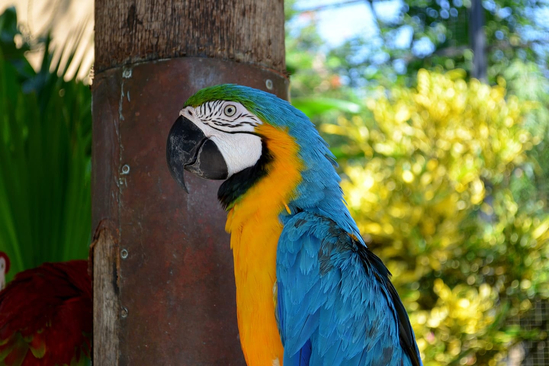 Bali bird park, Bali - Indonésie