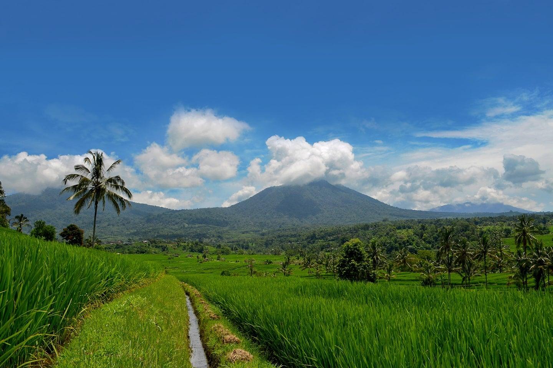 Rizières de Jatiluwih, Bali - Indonésie