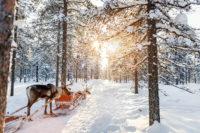 S'envoler à Laponie pour revivre l'esprit de noël toute l'année