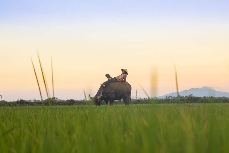 Pourquoi visiter le Vietnam ?