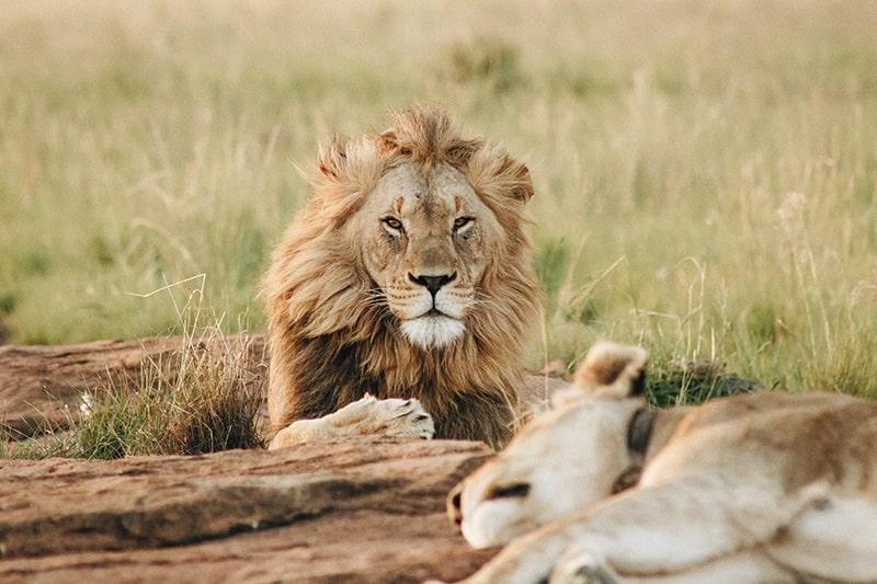 5 erreurs à éviter dans l'organisation d'un safari