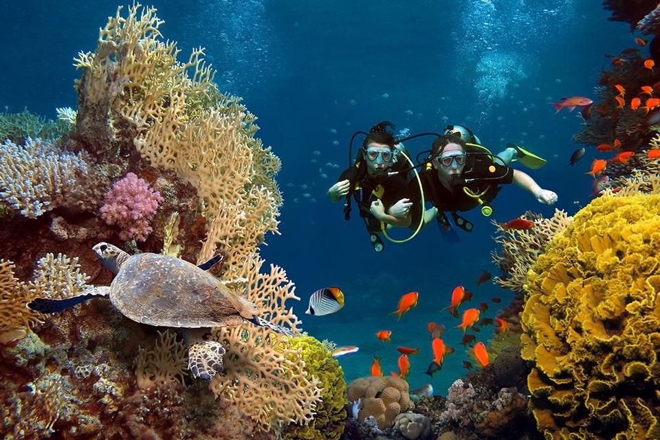 Plongée Péi, votre centre de plongée à l'Île de la Réunion